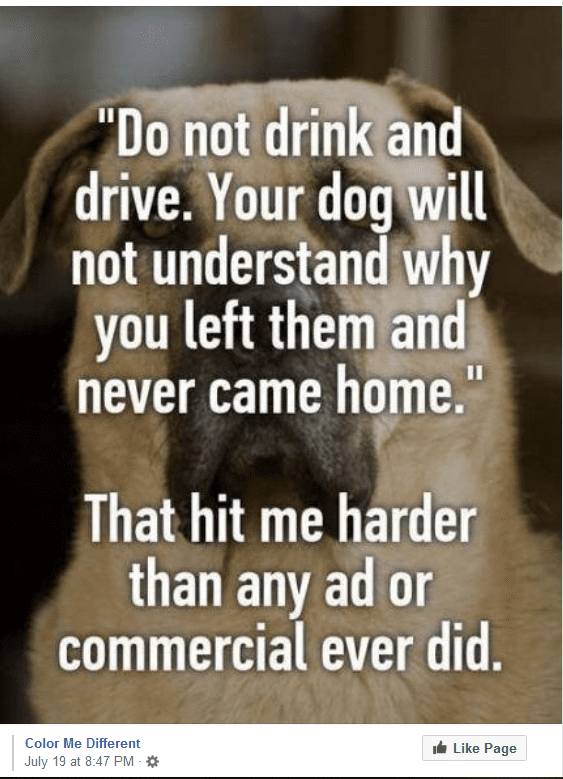 drunk driving dog ad